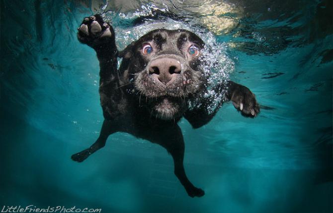 underwater-dog
